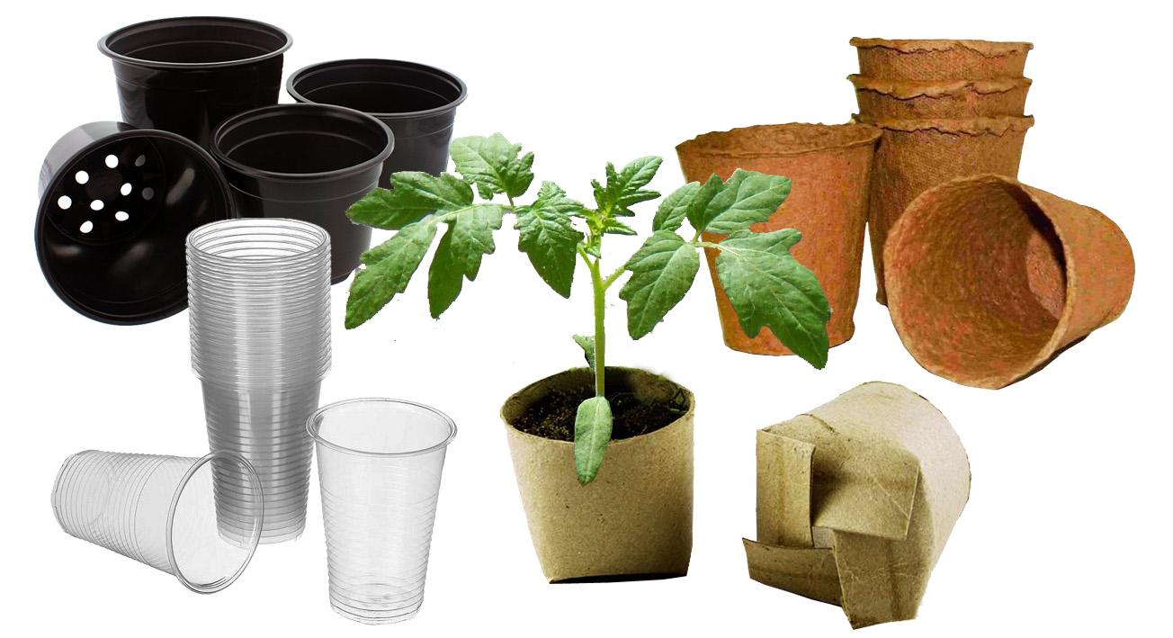 Как вырастить отличную рассаду помидор для посадки в открытый грунт или в теплицу