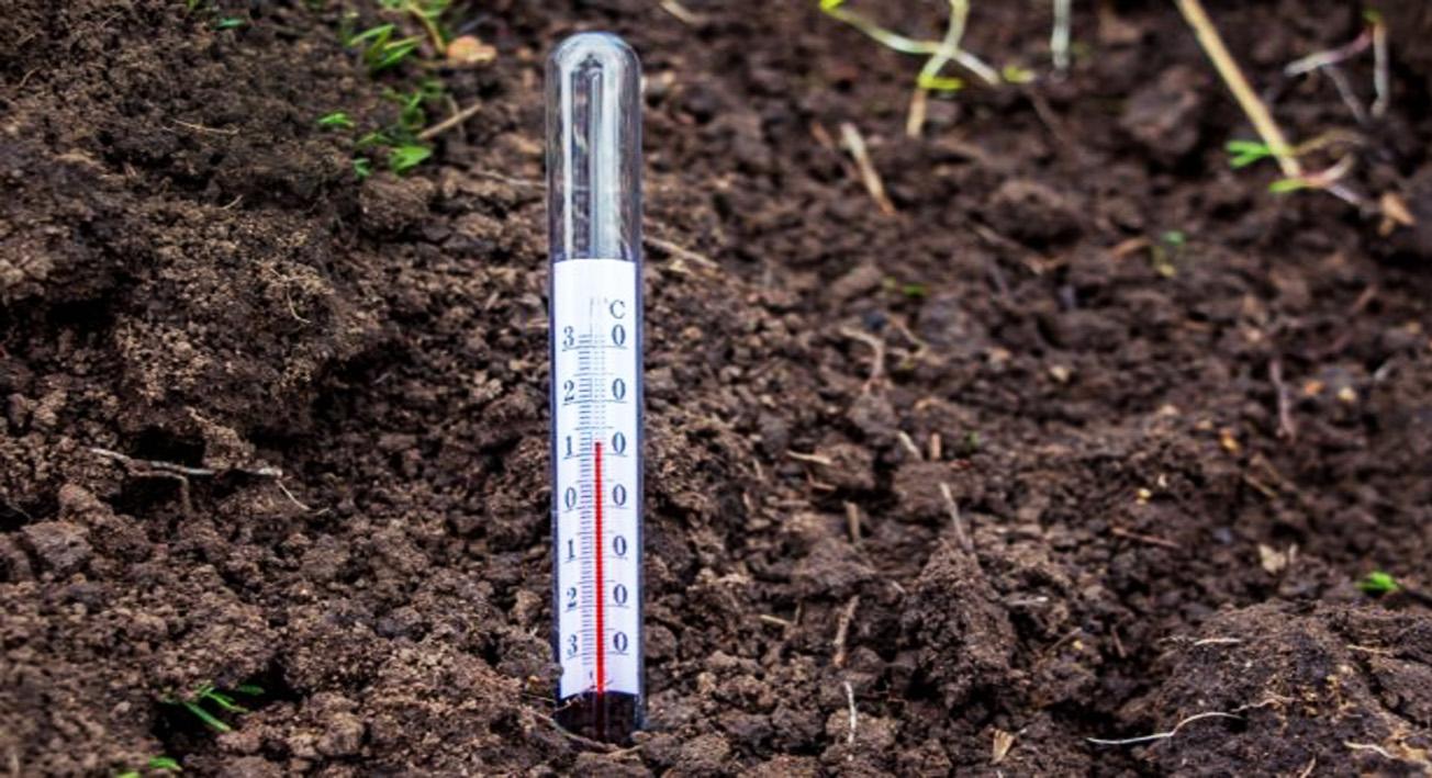 Как получить богатый урожай огурцов. Какие сорта выбрать для разных климатических зон России