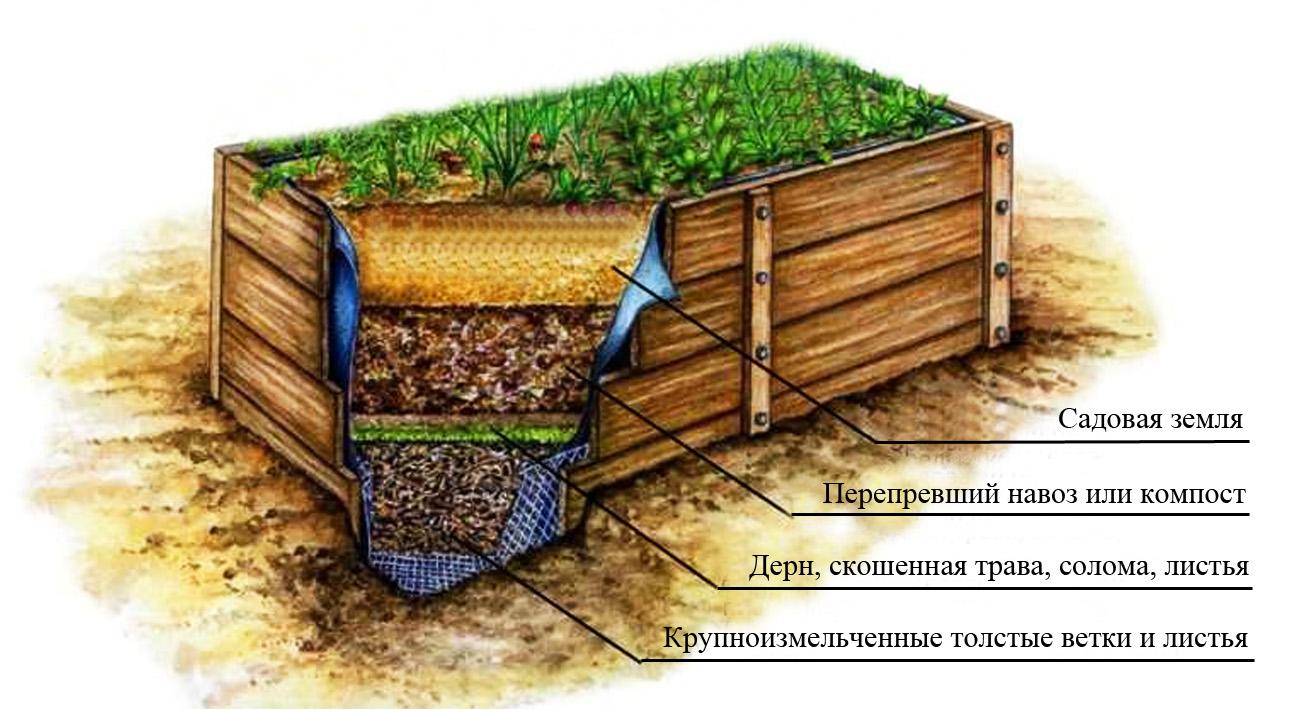 Правила проращивания и посадки гладиолусов на садовом участке