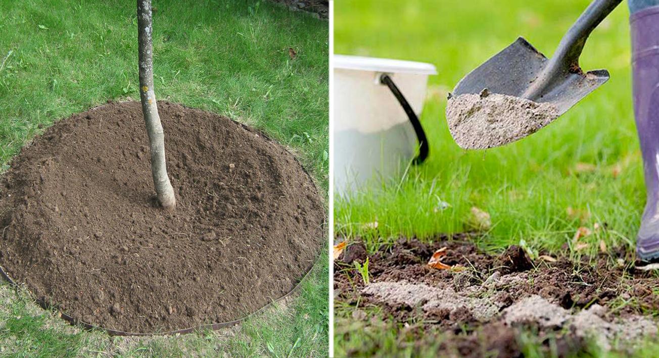 Самые действенные способы борьбы с тлей на садовом участке